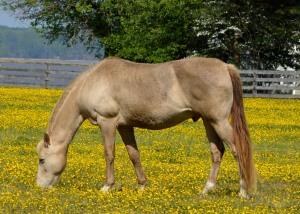 A horse grazes in a field next to Edward Maddox's Marlborough Point plot.